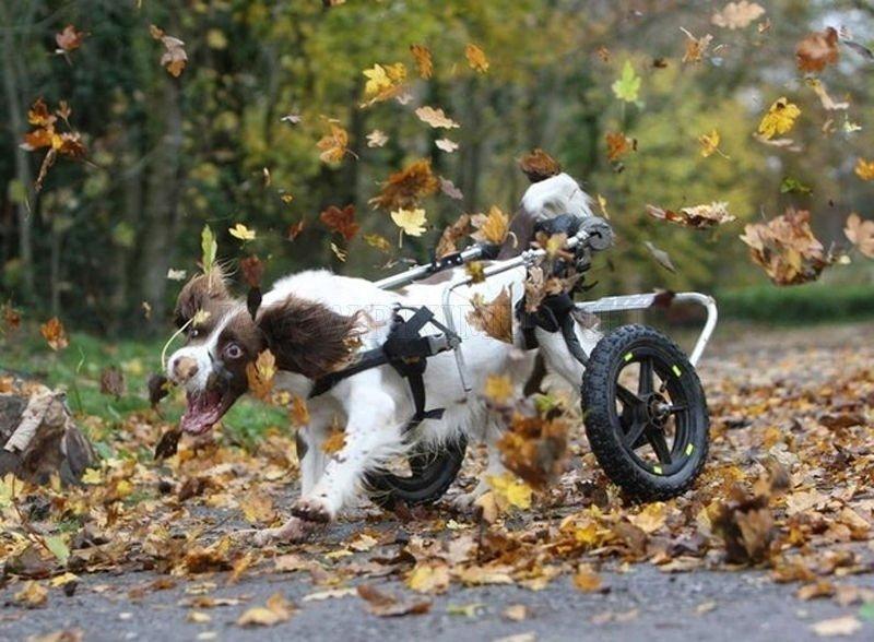 Perros Discapacitados