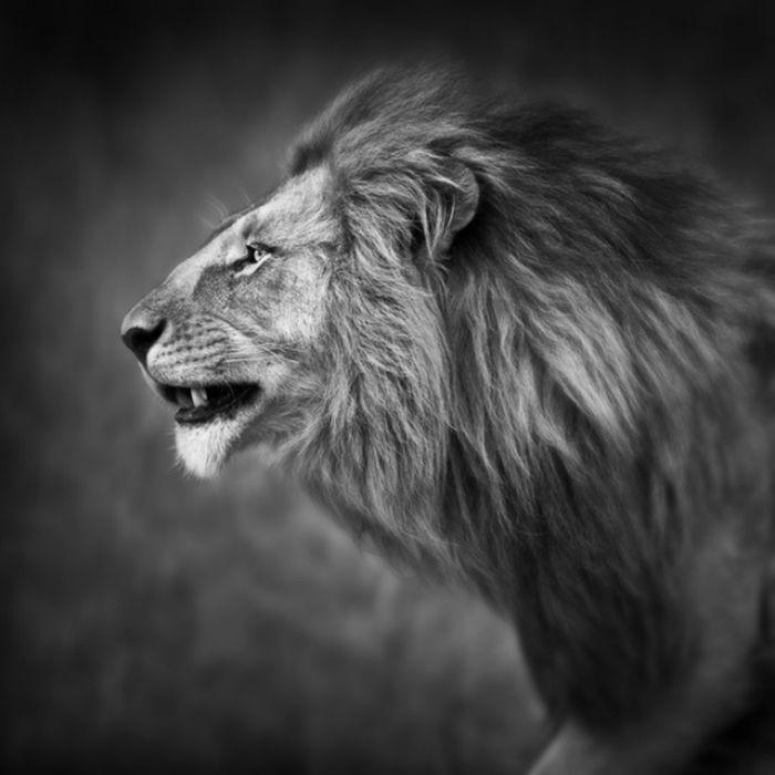 Hermosas fotografías de Animales en B & W