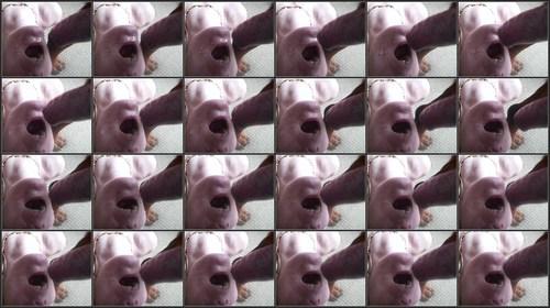 http://ist1-1.filesor.com/pimpandhost.com/4/5/4/6/45469/H/M/V/2/HMV2/dog37_m.jpg