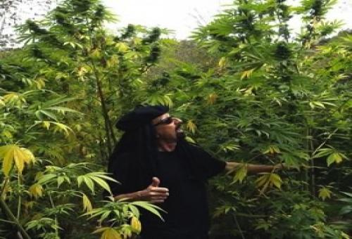 jorge20cervantes20flip - Marihuana horticultura del cannabis - Jorge Cervantes